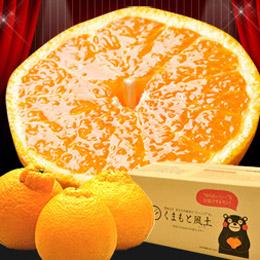 \柑橘の王様/本場熊本産デコみかん!【買うほどおまけ増量♪】