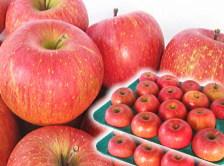 最安値に挑戦!青森県産りんご サンふじ ご家庭用に最適な訳あり10キロ箱【送料無料】
