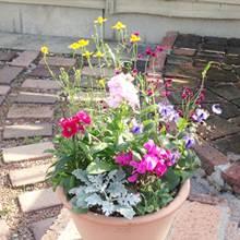 送料無料!長く楽しめる季節の寄せ植え