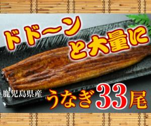 大隅産うなぎ蒲焼33尾セット